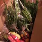 愛情たっぷりの野菜ボックス