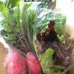 生命力あふれる野菜たち