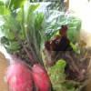 【ブログ】やっぱり野菜が好き!
